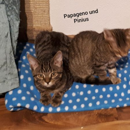 ⚠Notfellchen⚠ Elli, Papageno und Pinius